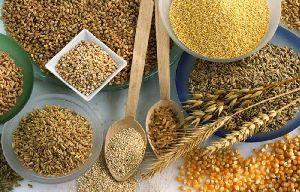 Rohalase Barley L