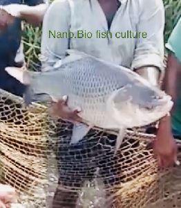 Nano.Bio Fish Services