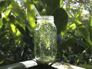Mixed Herbs Water