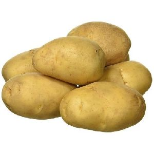 Fresh Big Potato