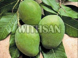 Fresh Raw Mango
