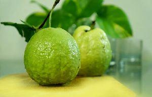 G-Vilas Guava Plant