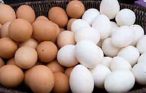 Cobb Hatching Egg