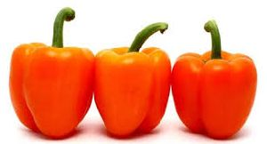 Fresh Orange Capsicum