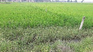Agricultural Land Sale and Purchase Service