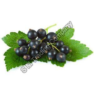 Fresh Blackcurrant