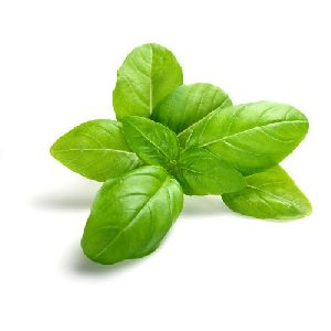 Exotic Basil Leaves
