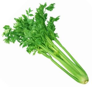 Exotic Celery Leaves