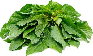 Fresh Green Amaranth Leaves