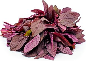 Fresh Red Amaranth Leaves