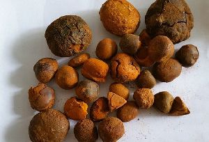Gall stones ox