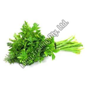 Organic Parsely Leaves