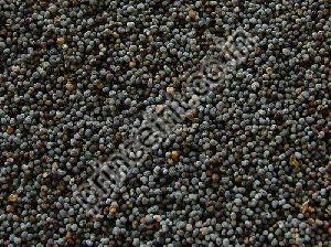 Indian Shatavari Herbal Seeds