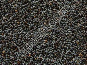 Nepali Shatavari Herbal Seeds