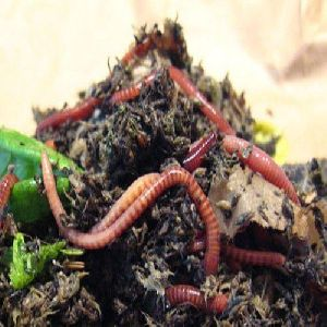 Earthworm Vermicompost Fertilizer