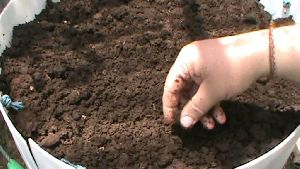 Manure Vermicompost
