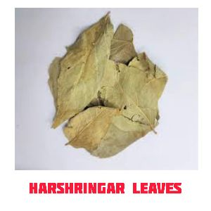 Harshringar Leaves