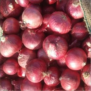 Agrifound Light Red Onion