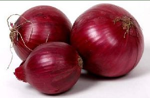 Pusa Red Onion