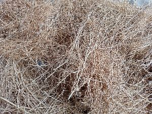 Dried Khus Roots