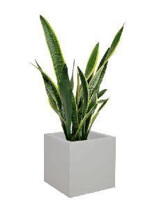 Crotera Stone Planter