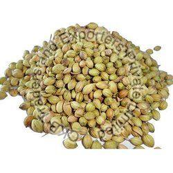 Normal Whole Coriander Seeds
