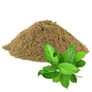 Gymnema Leaves Powder