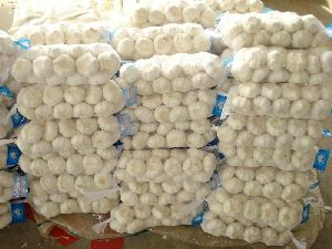 Export Garlic