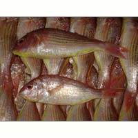 Japanese Threadfin Bream Fish
