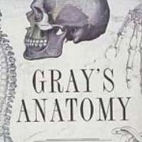Gray's Anatomy Medical Book
