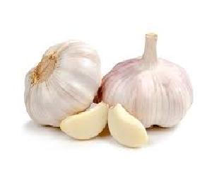 Fresh Garlic 02