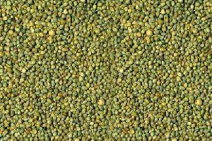 Millet Seed 02