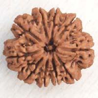 10 Mukhi Nepali Rudraksha Beads