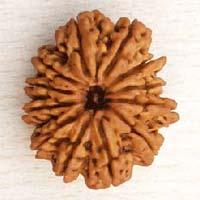 12 Mukhi Nepali Rudraksha Beads
