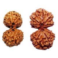 Gauri Shankar Java Rudraksha Beads