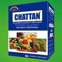 Chattan (Verticilium)