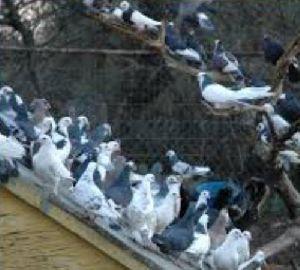 Birds Control Services