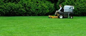 Lawn Care & Treatment Services
