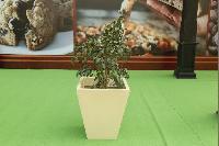 FRP Planters 02