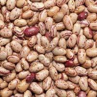 Pinto Kidney Beans