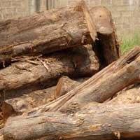 Ghana Teak Wood - 03