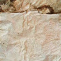 Dry Salted Goat Skin
