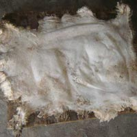 Dry Salted Sheep Skin