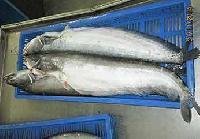 Frozen Boal Fish (Attu Vala)