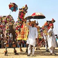 Camel Rental Services for Wedding