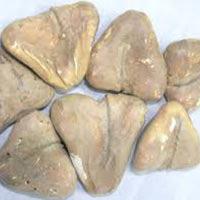 Dry Singhara