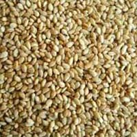 Single Skin Sesame Seeds