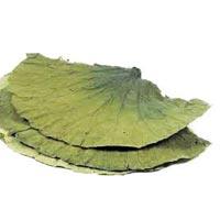 Lotus Leaves Tea