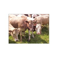 Talc Powder For Animal Feed Industry