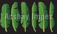 Fresh Banana Leaves
